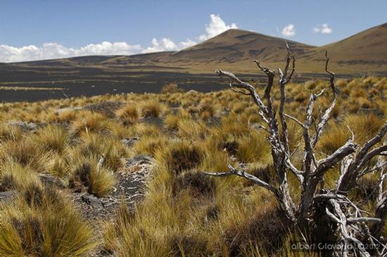 Coirones - flora característica de la reserva