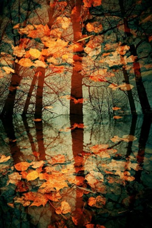 Autumn_Leaves_by_Eredel