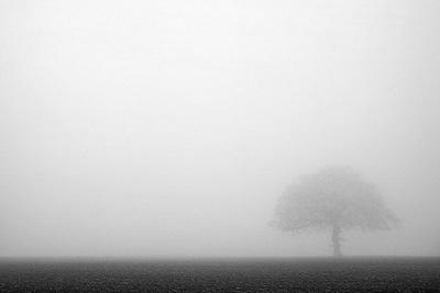 arbol con niebla